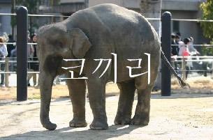 zou、ぞう、ゾウ