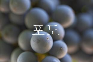 ブドウ、葡萄
