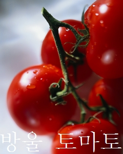 みにとまと、mini tomato