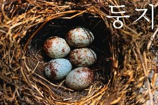 (鳥の)巣